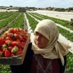 Il lavoro nelle colonie, distorsione economica dell'occupazione
