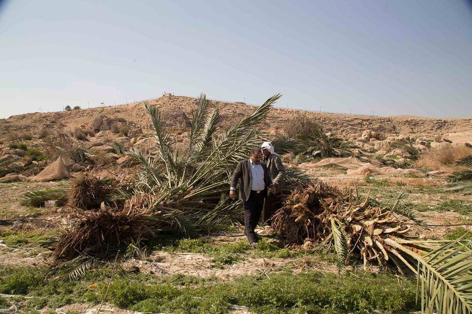 Olive trees destroyed in Zbeidat
